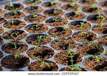 Many young plant in germination tray - stock photo