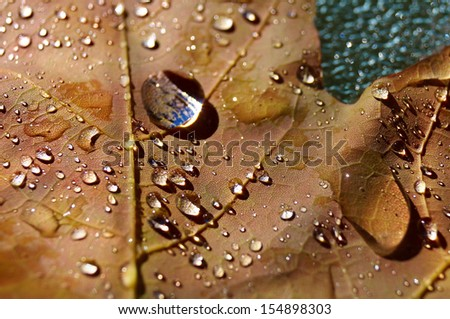 Maple autumn leaf with water droplets - stock photo
