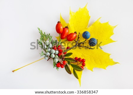 maple leaf, cotoneaster, rosa hips, blackthorn with berries - stock photo