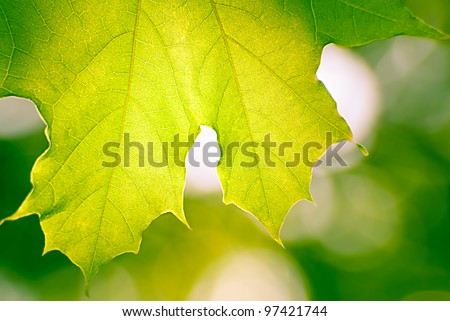 Maple leaf in autumn blurred background - stock photo