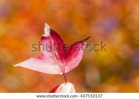 maple leaf in hand on abstract leave background - stock photo