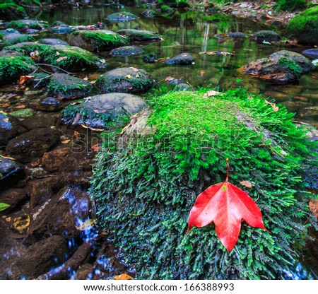 Maple leaf In the green forest during autumn at Phukradung National Park,Asia Thailand - stock photo