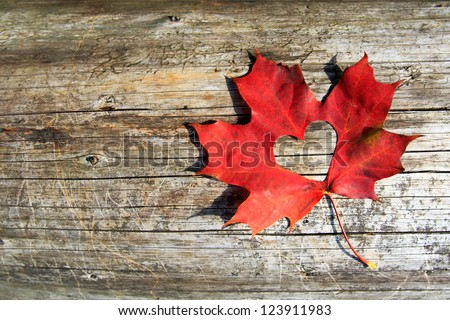 Maple-Leaf to cut the heart on the tree - stock photo