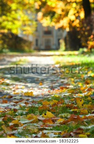 Maple leafs in October park with low depth of field - stock photo