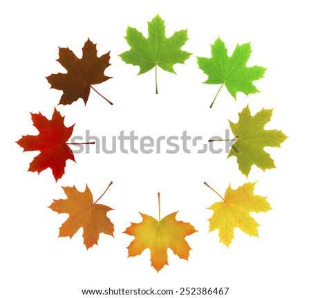 maple leafs - stock photo, green leaf, canada symbol, on a white background, clipping path included (XXLarge), a lot of details - stock photo