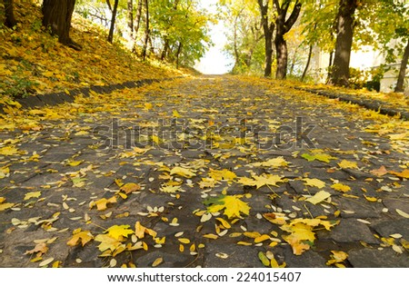 Maple leaves fall in an autumn park - stock photo