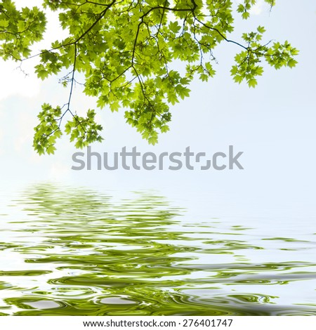 maple leaves reflection - stock photo