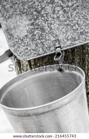 Maple Sap buckets Closeup on trees in spring - stock photo