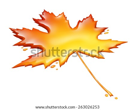 Maple syrup leaf isolated on a white background as a sweet golden brown delicious liquid representing a natural food product from tree sap for cooking or baking. - stock photo