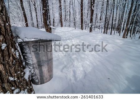 Maple syrup sugar shack in the woods. - stock photo