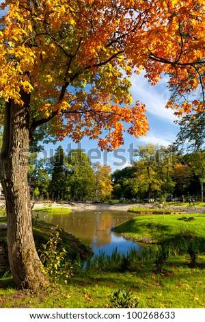 Maple tree at Kadriorg Park in Tallinn. Estonia - stock photo