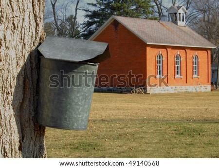 maple tree with sap bucket, schoolhouse in background, Dixboro, MI - stock photo