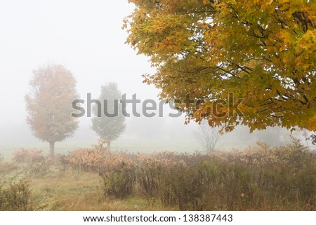 Maple trees during early morning fog, Stowe Vermont, USA - stock photo