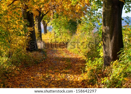 Maple trees in autumn alley - stock photo