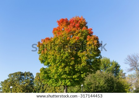 Maple Trees in the fall in Canada with copy space - stock photo