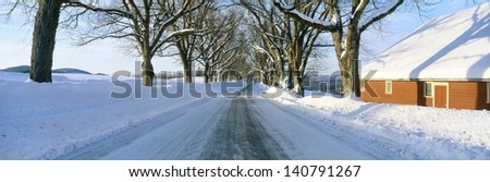 Maple Trees lining a snowy road in Lyndonville, Vermont - stock photo