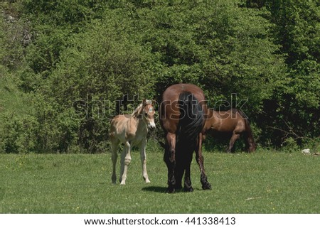 Mare and cute foal in summer pasture - stock photo