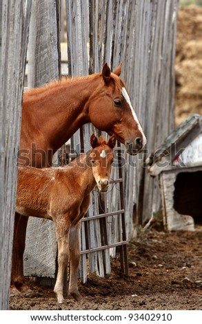 Mare and foal behind board fence - stock photo