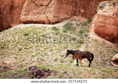 Mare and foal in canyon Timerlik, Kazakhstan - stock photo