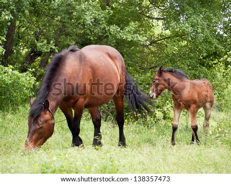 mare and her colt in pasture - stock photo