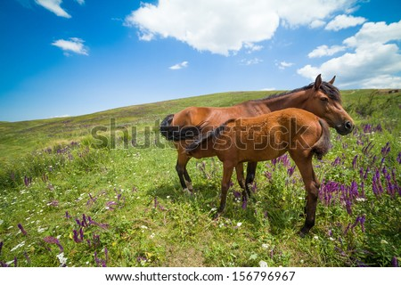 Mare feeding colt on green meadow - stock photo