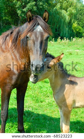 Mare with a foal - stock photo