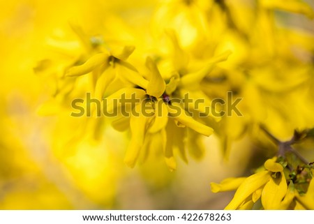 Marigold flower background. Yellow leaves on the tree in autumn. - stock photo