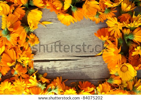 marigold flowers over wooden background, autumn - stock photo