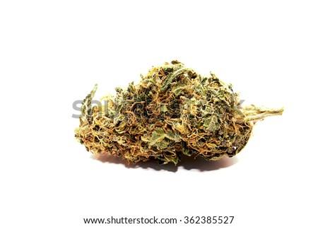 Marijuana Bud Close Up on white background. - stock photo