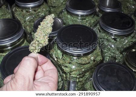 Marijuana Bud Held in Front of Jars Packed Full - stock photo