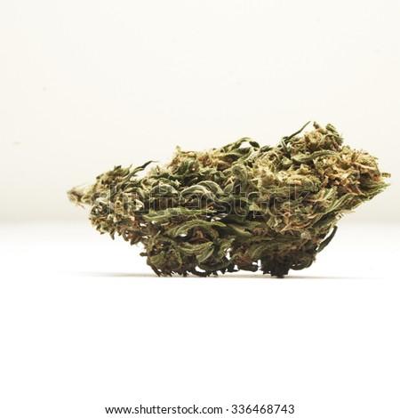 Marijuana or Cannabis Plant Bud Containing the Drug THC  - stock photo