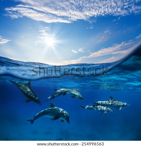 Marine animals design template. A flock of dolphins underwater with sunlight - stock photo