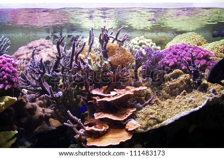 marine aquarium, coral aquarium, Aquarium corals reef - stock photo