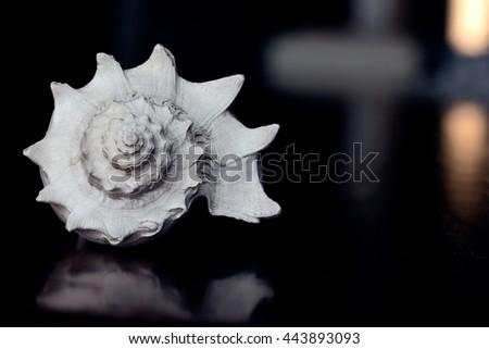 Marine sea shell dark blue background closeup - stock photo
