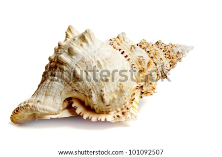 Marine sea shell in a studio setting against a white background - stock photo
