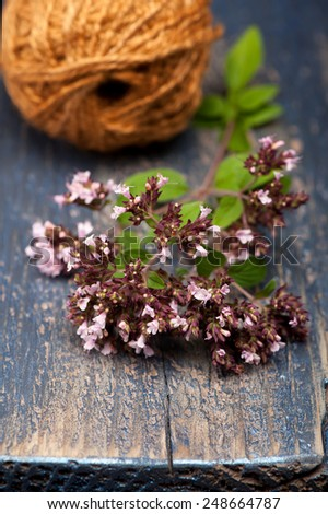 Marjoram Origanum vulgare - stock photo