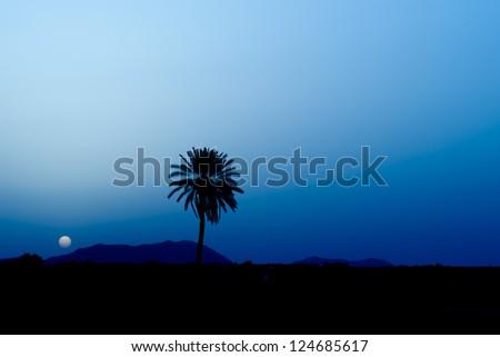 Maroc Marrakech sunrise desert view - stock photo
