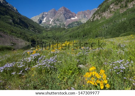 Maroon Bells near Aspen in the Colorado Rocky Mountains - wildflowers near Maroon Lake. - stock photo