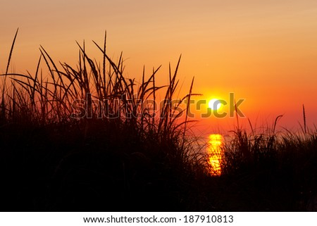 Marram Grass Silhouette at Sunset. Beach grasses are shown in silhouette with a Lake Michigan sunset in the background. Ludington State Park, Michigan - stock photo