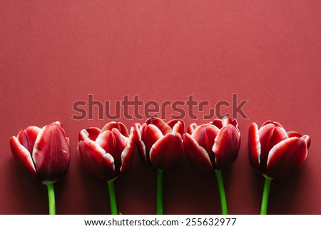 Marsala colored tulips on marsala paper - stock photo
