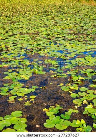 Marsh at Cuyahoga Valley National Park - stock photo