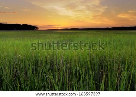 Marsh Grass at Sunrise - stock photo