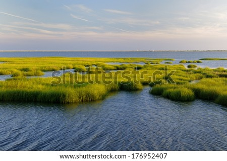 Marsh Grass Glowing in Evening Sun - stock photo