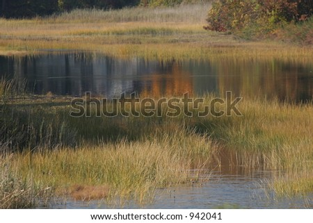 Marsh in Water - stock photo