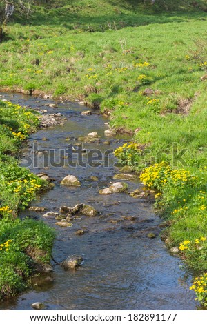 Marsh marigold growing at the waters edge - stock photo