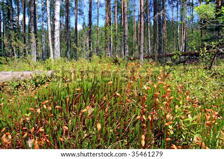marsh moss - stock photo