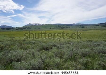 Marsh views, Yellowstone - stock photo