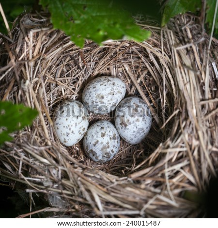 Marsh Warbler (Acrocephalus palustris).Wild bird in a natural habitat. Nest. - stock photo