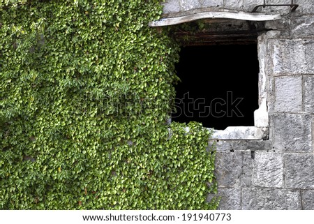 masonry wall with a window with ivy - stock photo
