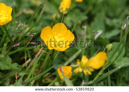 mass of meadow flowers - stock photo